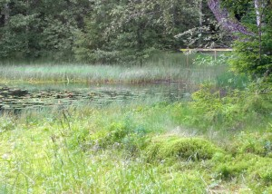 Hedmark sommer skog 2